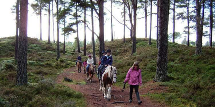 Children on ponies being led through tall pine trees