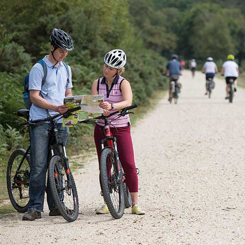 Two cyclists on a wide path beside trees pausing to look at a map