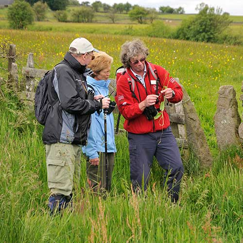 A ranger showing some plants to two visitors