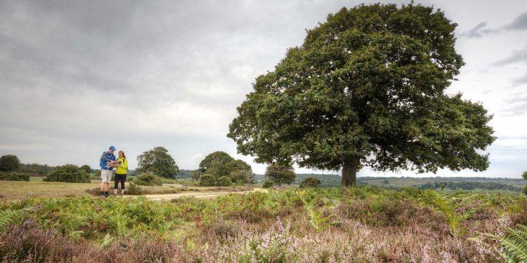 A tree amongst open heathland