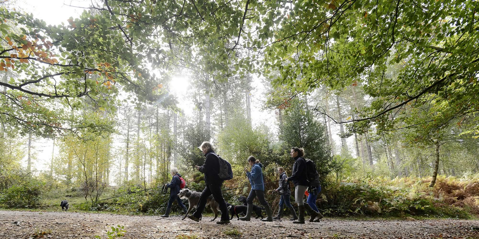Group walking dogs on long leads underneath autumnal trees