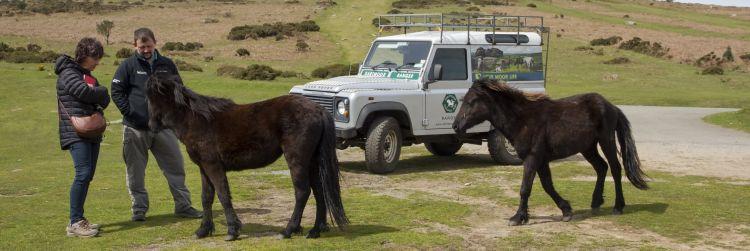Dartmoor Ranger
